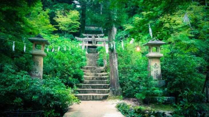 【Lightroomプリセット】夏の新緑向けレタッチ