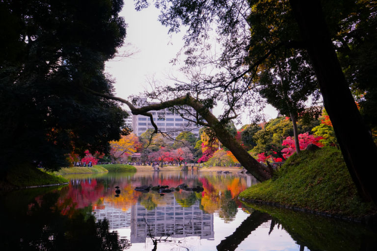 Autumn Reflection at Koishikawa korakuen garden